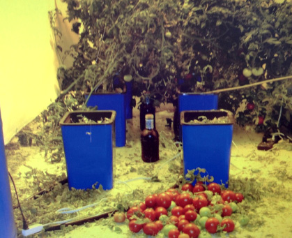 LightRail side of of Tomato Case studay