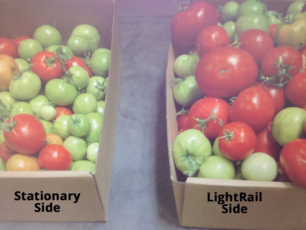 Tomato yield comparison - Side by Side - fixed light vs moving light source