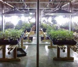 Supplemental greenhouse lighting with LightRail light movers, with each grow light mover on one segment.