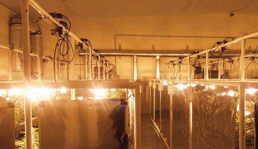 Grow lamp systems for indoor growing systems