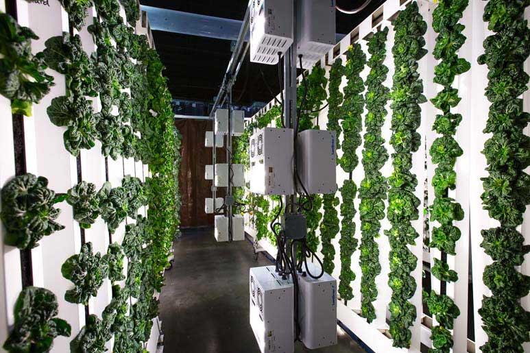 Indoor Grow Equipment Light Movers Vertical Growing