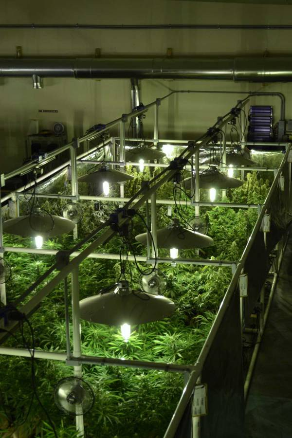 Lightrail 4.20 AdjustaDrive light mover makes it easy to plan out any sized indoor grow system.