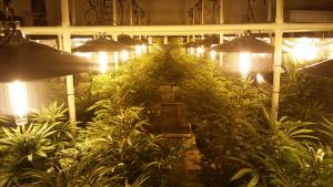 commercial indoor grow lights with LightRail light movers