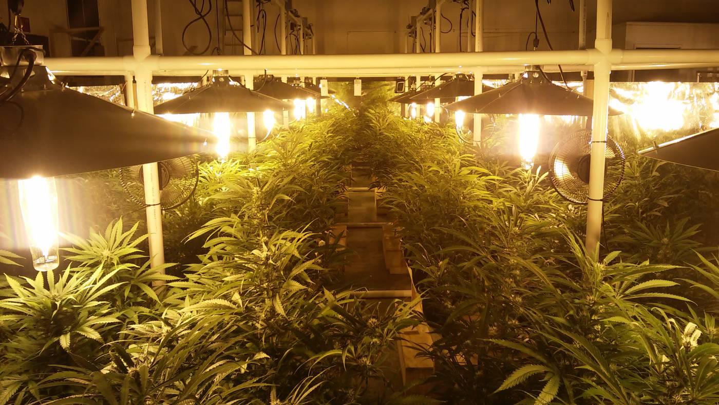 Light Grow Room Setup
