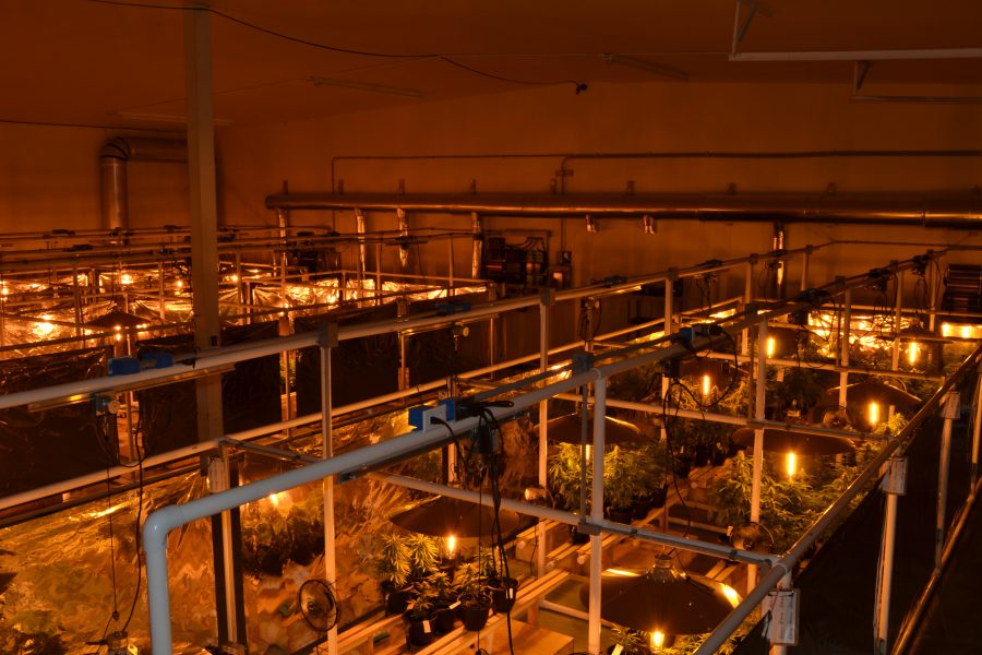Light movers take the heat off the plants directly and they take some of the heat out of the grow room with fewer grow lamps needed. The benefits of light movers include getting the heat off.