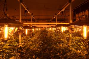 Botuny Unlimited- Grow Light system with LightRail