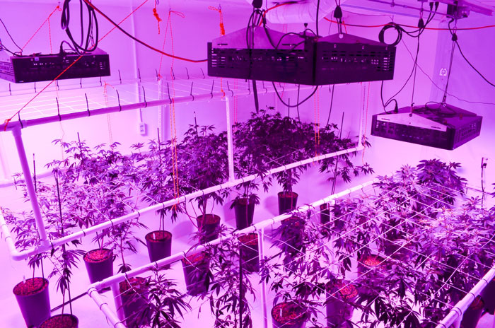 LED grow lights are moved with LightRail light movers for superior results.