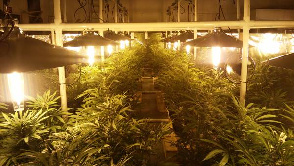 Basement grow room tips for our indoor grow setup includes noise abatement with insulation