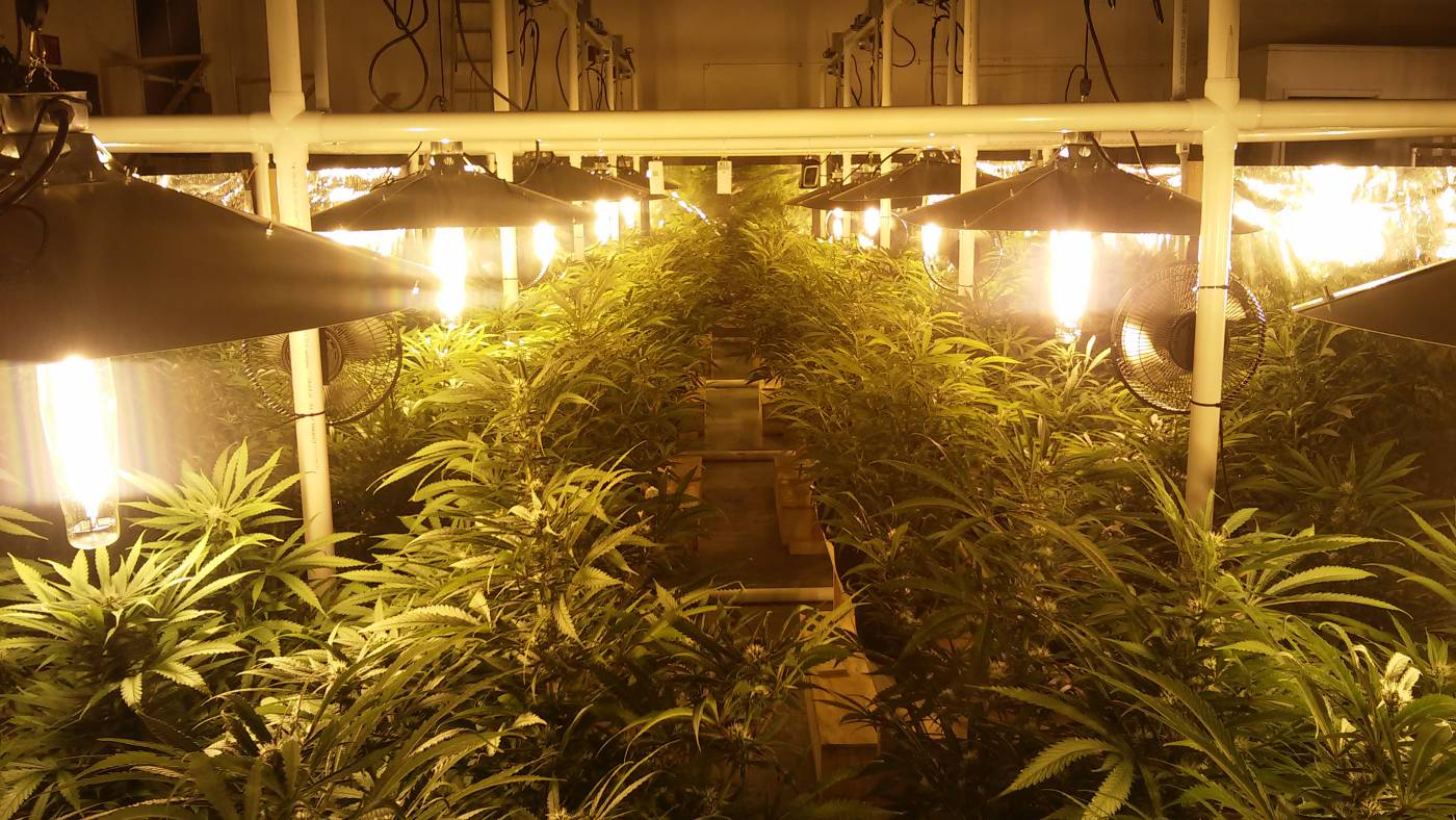 lighting indoor light for barriers hps vs led growing grow lights domination plants to