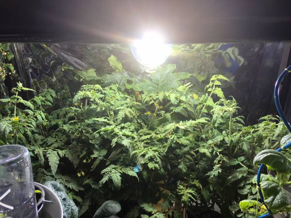 Indoor gardening needs good quality grow lamp coverage and LightRail light movers is the best way to maximize our indoor grow lights.