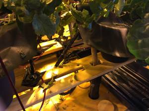 Here is an active hydroponic system with the water reservoir under the plants. This indoor grow setup is Botany Unlimited's HyGrowCage.