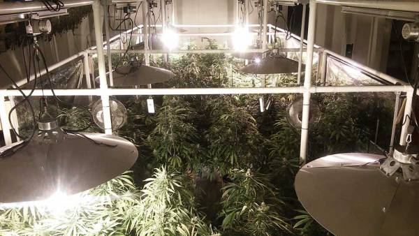 Grow Room With Light Movers