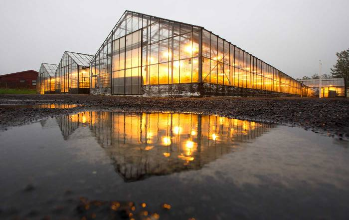 Winter Greenhouse Lights