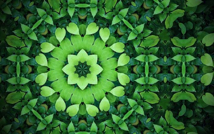 Abstract greenery background, heart shaped green leaves with kaleidoscope effect