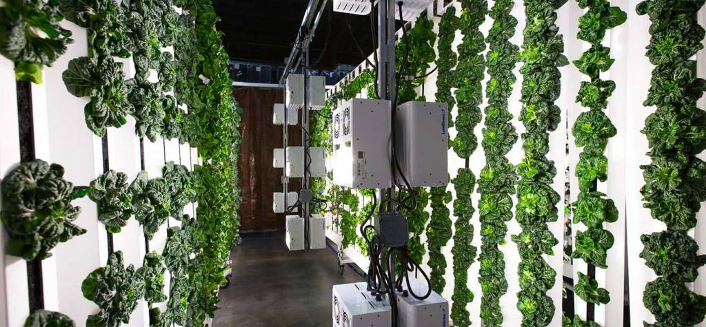 Vertically growing food - the next frontier